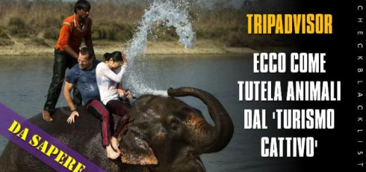 tripadvisor-turismo-animali