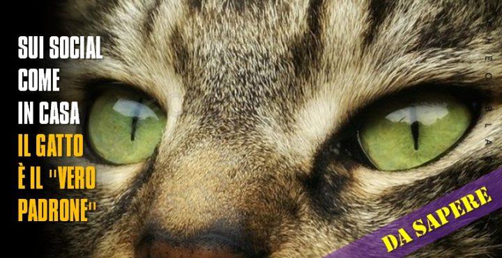 Sui social come in casa, il gatto è il ''vero padrone ...